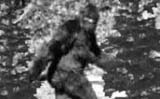 Bigfoot Encounter Murder Mystery