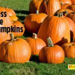 Pass the Pumpkins