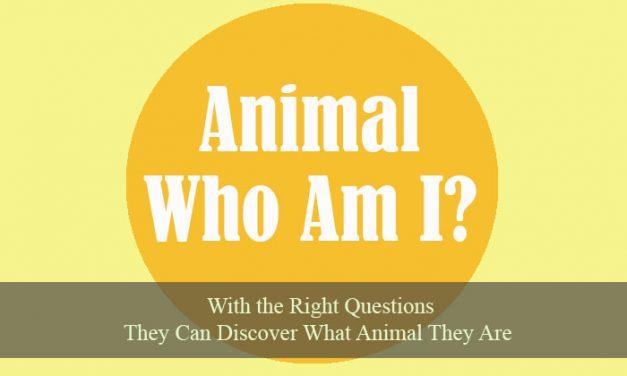 Animal Who Am I
